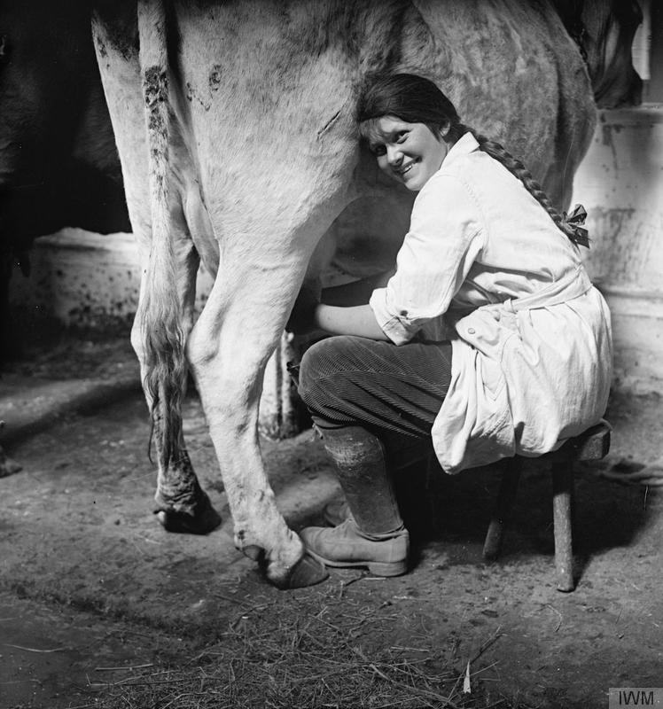 A member of the Women's Land Army milking a cow © IWM (Q 30680).