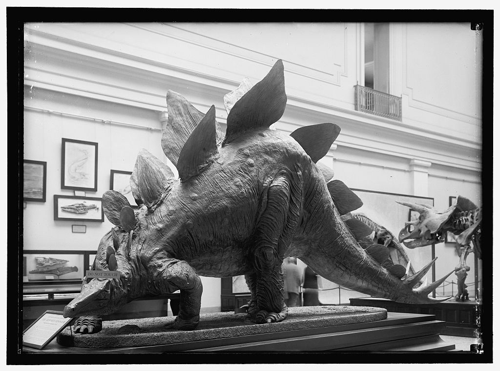 Dinosaur mounted in the Smithsonian. Available via the Library of Congress. https://www.loc.gov/item/hec2008005324/.